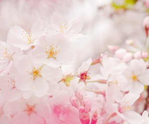 flowers, nature, and japan image