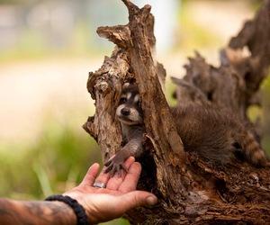 animal, nature, and hand image