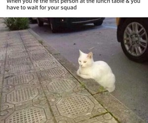 cat, funny, and squad image