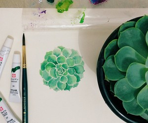 drawing, plant, and succulent image