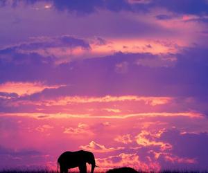 elephant, animal, and sky image