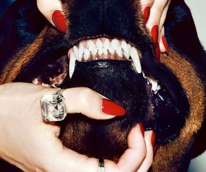 rottweiler, vicious, and red nails image