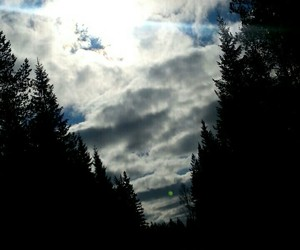 forest, sky, and sun image
