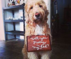 dog, marry me, and pet image