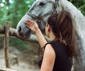 35mm, animals, and horse image
