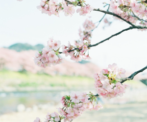 flowers, spring, and love image
