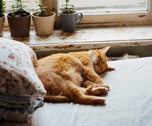cat, animal, and sleep image