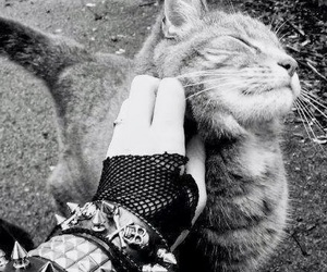 cat, black and white, and metal image