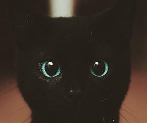 black, kitten, and blue image