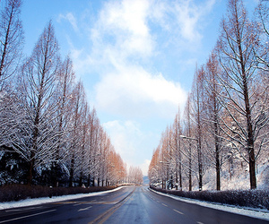 tree, beautiful, and road image