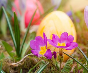 easter, public domain, and images image