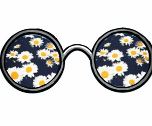 flowers, daisy, and glasses image