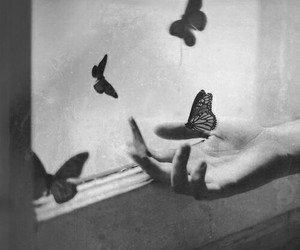 black and white, butterflies, and lost image
