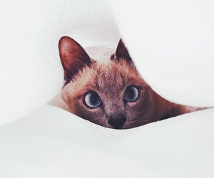 cat, lovely, and hipster image
