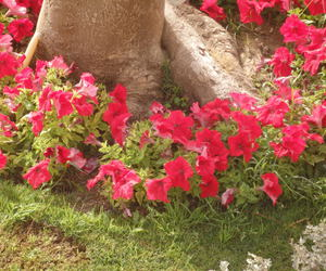 egypt, hotel, and flowers image