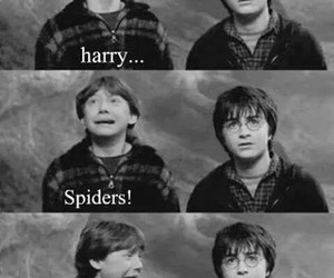 harry potter, spider, and harry image