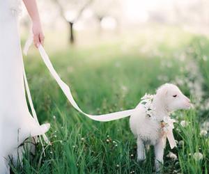 lamb and spring image