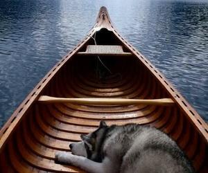 dog, boat, and husky image