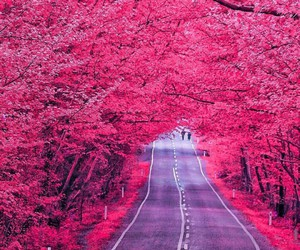 pink and road image