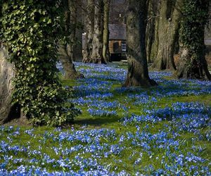 flowers, bluebells, and spring image