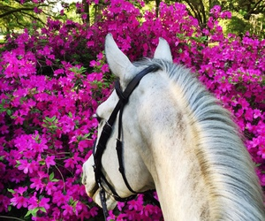 beautiful, horse, and relax image