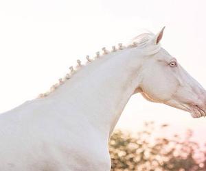 beautiful, elegant, and horse image