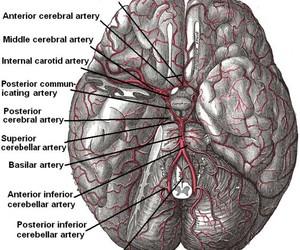 brain, medicine, and med school image