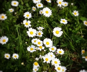 backround, daisies, and easter image