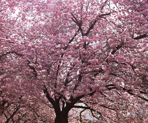 pink, rose, and tree image