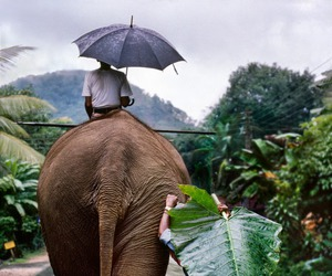 elephant, nature, and travel image