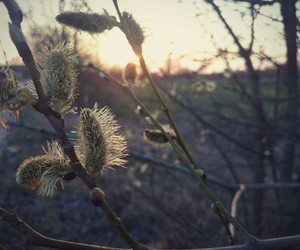 evening, spring, and flower image
