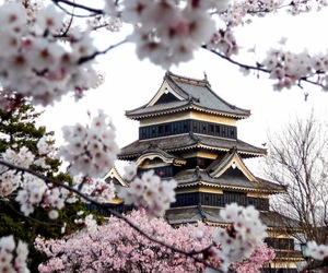 japan and sakura image