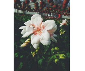 flower, vintage, and lot of image