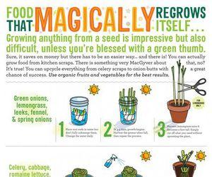 plants, diy, and regrow image