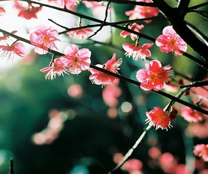 blossom, flower, and pastel image
