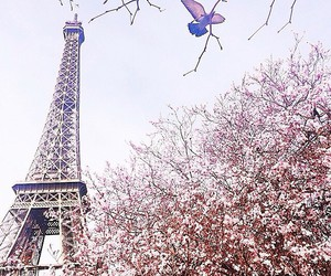 paris, france, and spring image