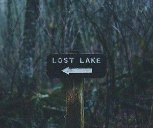 lost, tumblr, and forest image