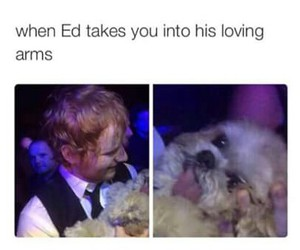 ed sheeran, funny, and dog image