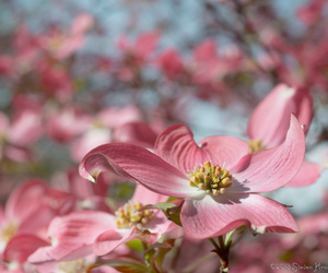 bloom, bokeh, and flash image