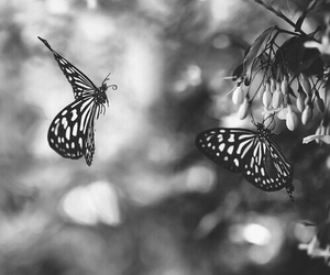 butterfly, black and white, and nature image