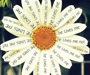 flowers, love, and daisy image