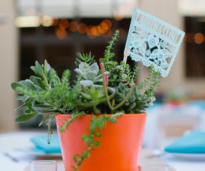 succulent, wedding favour, and mexican wedding image