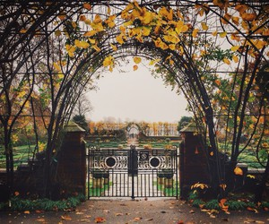 autumn, flowers, and garden image