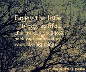 quotes, sunlight, and tree image