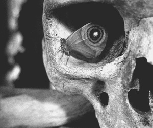 butterfly, skull, and eye image