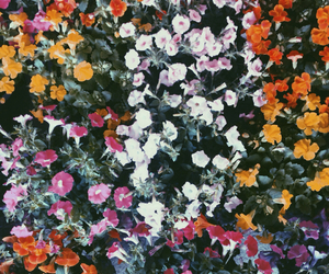 faded, floral, and flowers image
