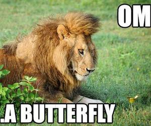 butterfly, lion, and funny image