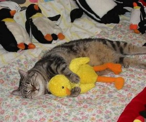 cat, duck, and sleeping image