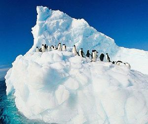 ice and penguin image