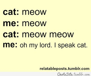 cat, meow, and text image